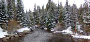 White River Forest in Winter